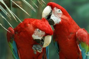 Macaw 010 by MonsterBrand-stock