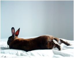 Relaxed Bunny by ph0t0k1tty