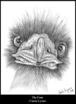 Emu Drawing by carriephlyons by TraditionalArt