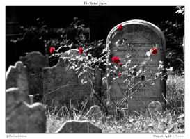 The Roses' grave by yellowcaseartist