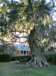 Sunset though the Spanish Moss by DanielleDucrest