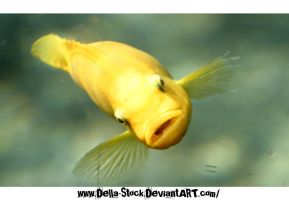 Yellow FishHead by Della-Stock