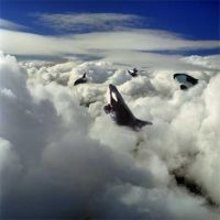 Orcas in an Ocean of Clouds by Marahuta
