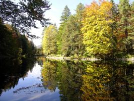 Autumn colors reflected by johannmetzger