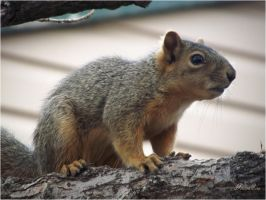 squirrel-serial-4 So tell me what's new by sonafoitova
