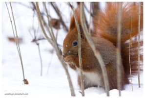 Wildlife In The Winter Forest by squirrelhollow