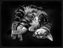 Good dreams by kanes