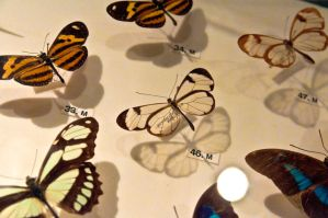 moths and butterflies stock147 by hatestock