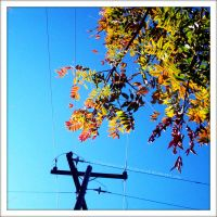 ...Wired autumn... by SCiganovich