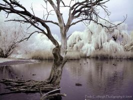 Infrared Pond IV by La-Vita-a-Bella