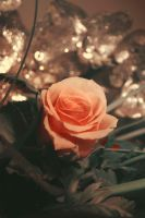 He who wants a rose must respect the thorn. by Einas-A