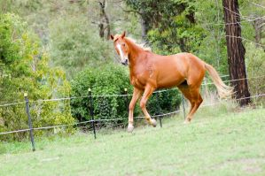half rear turn canter by Chunga-Stock
