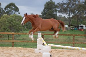 ASH all legs up showjumping by Chunga-Stock