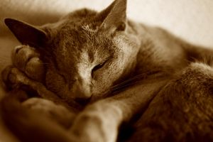 Cat nap by The-Underwriter