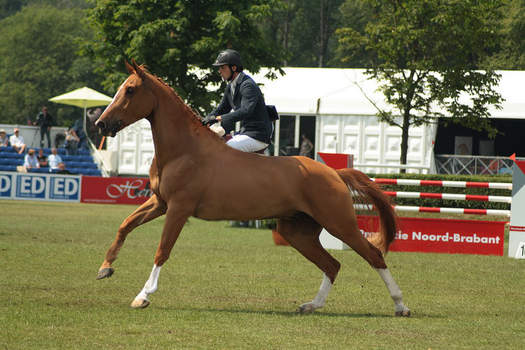 chestnut removed tack by suuslovertje