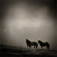 Horses in the Balkan by samuilvel