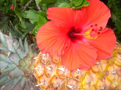 Hibiscus and pineapple by Maleiva