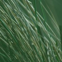 Marram by 1Mathew7