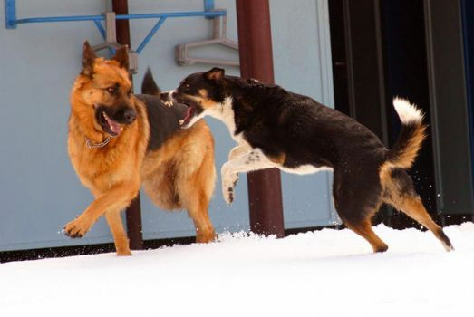 Dogs playing by marquis73