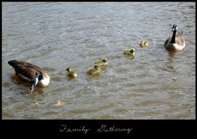 The Family Line by Sharulia