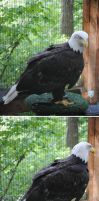 Raptor Center 7 by PirateLotus-Stock