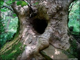Even a tree has a heart. by Estruda