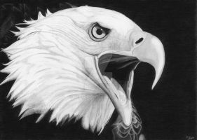.the.eagle. by xc0rpio