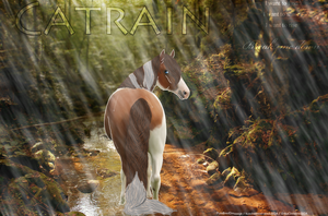 Catrain by PureBredDressage
