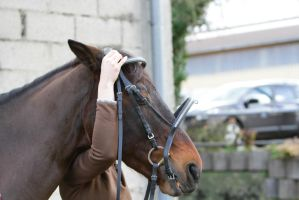 Putting on a Bridle - Step 6 by LuDa-Stock