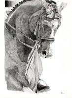 Dressage Study by ewportfolio