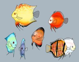 Rainbow of Discus by DarkFeather