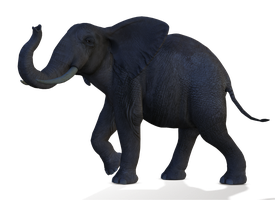 Elephant 1 PNG by Variety-Stock