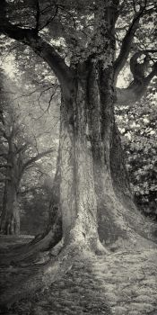Tree of Awesome by SprenklePhotography