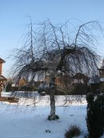 Willow-like tree 7278 by Maxine190889