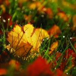 Falling leaves by oopsy--daisy
