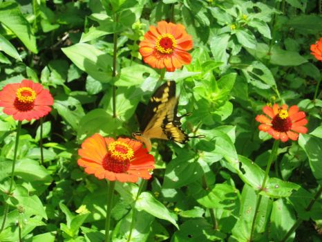 Yellow butterfly by desmi