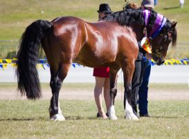 STOCK - Gold Coast Show 307 by fillyrox