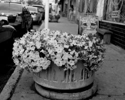 Street Flowers by Cadha13