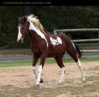 bay tobiano paint 1 by venomxbaby