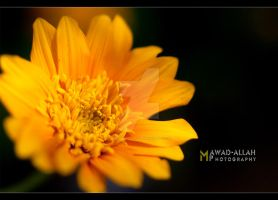 Spring Flower ::3:: by MaStErOfCaRz