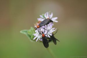 Lovebug Party by DracoFlameus