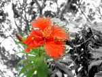 Hibisco by cavenaghi9