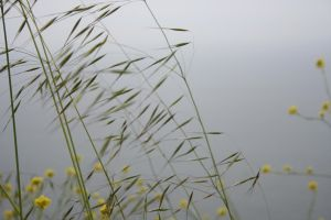 Wild Grass by thzinc
