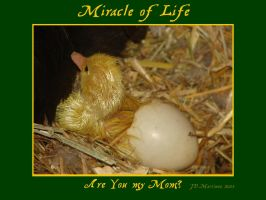 MIracle of Life 3 by dragonpyper