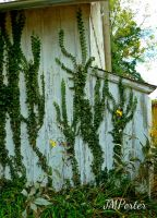 Shed Vines by JMPorter
