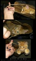 Kitty in a Bag by Jamoomers