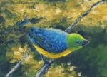 Blue-Naped Chlorophonia by cael-illus