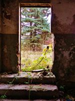 abandoned furniture plants by tussy1483