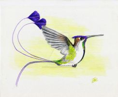 paddletail hummingbird by winstonscreator