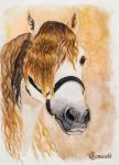 Autumn Andalusian by Comacold